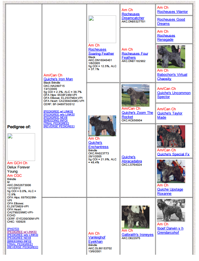https://sites.google.com/a/greylinebouviers.com/www/justin-pedigree/Delux%20Forever%20Young%20Pedigree-1.png